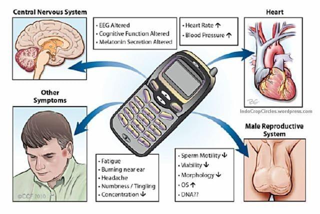 bahaya radiasi handphone